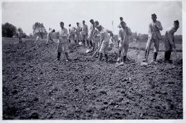 1943 unbekannt Bauarbeiten Leitha 37AH