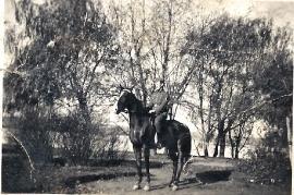 1938 P. Milleschitz 79MP