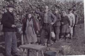 1972 bei der Weinlese. 14LÖ