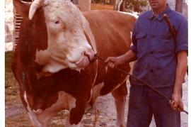 1971 7 Gemeindestier 940 kg. und Matjas Dürr
